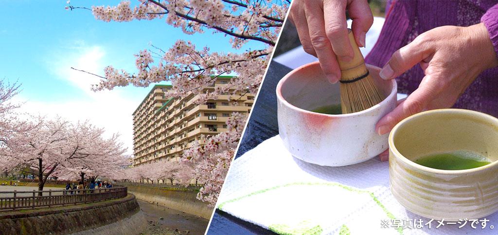 桜のトンネル/野点