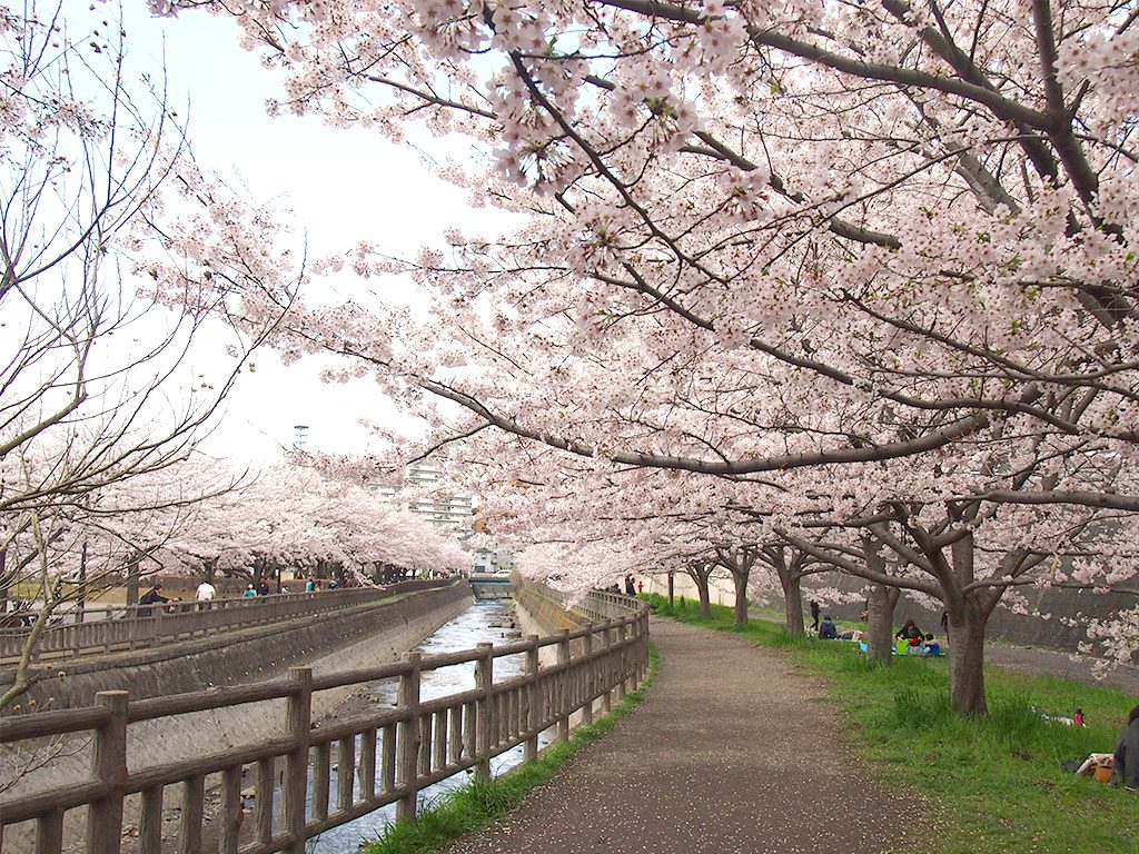 北部公園 お花見スポット 桜のトンネル