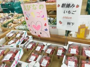 海老名産の朝摘みイチゴ