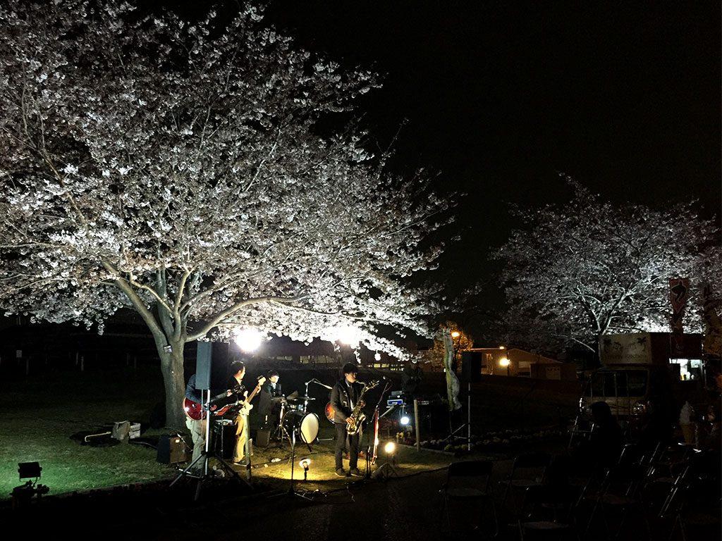県立相模三川公園 桜ライトアップ 夜桜