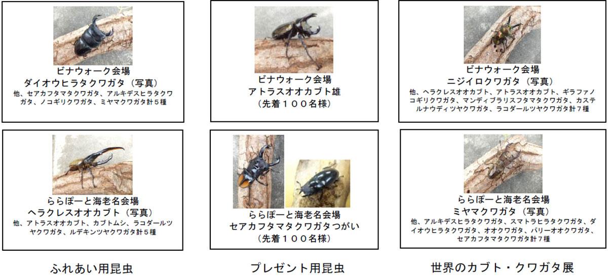 昆虫プレゼント