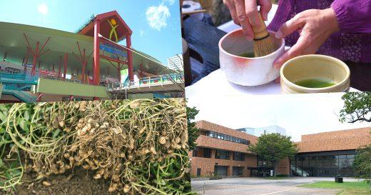 ビナウォーク/茶会/落花生/海老名市文化会館